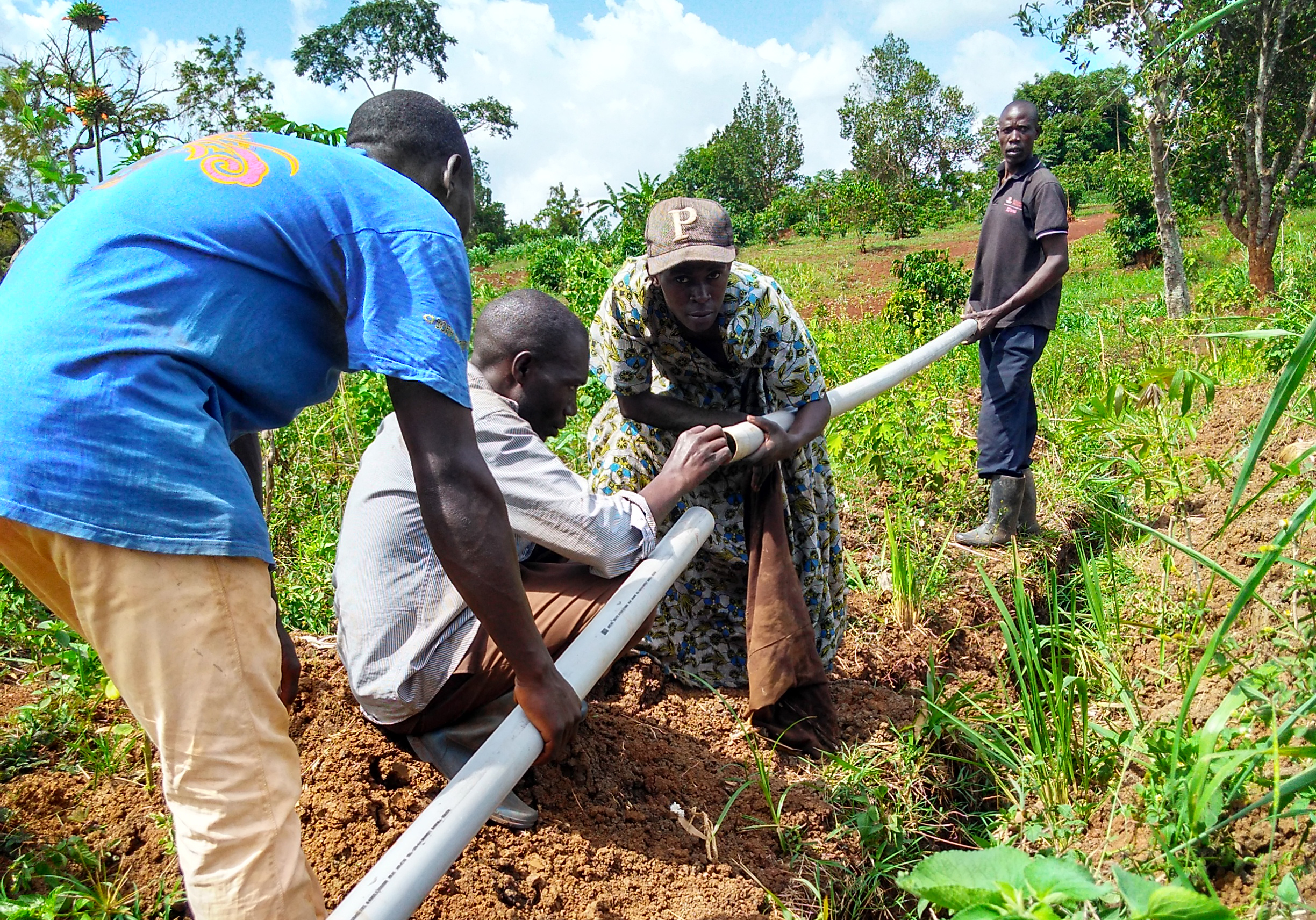Young men work together to connect irrigation pipe in farm field.