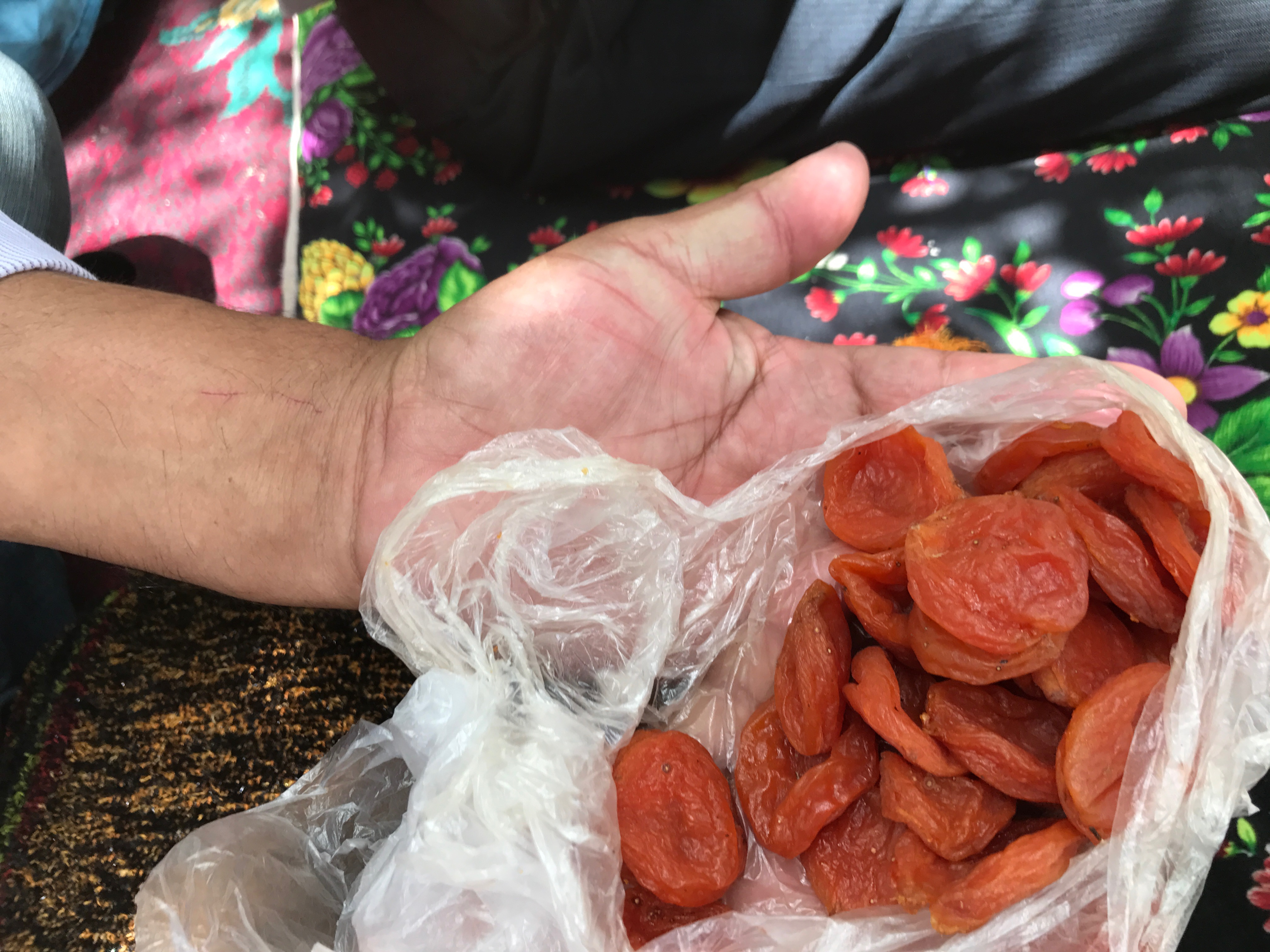 dried apricots in a hand in Tajikistan
