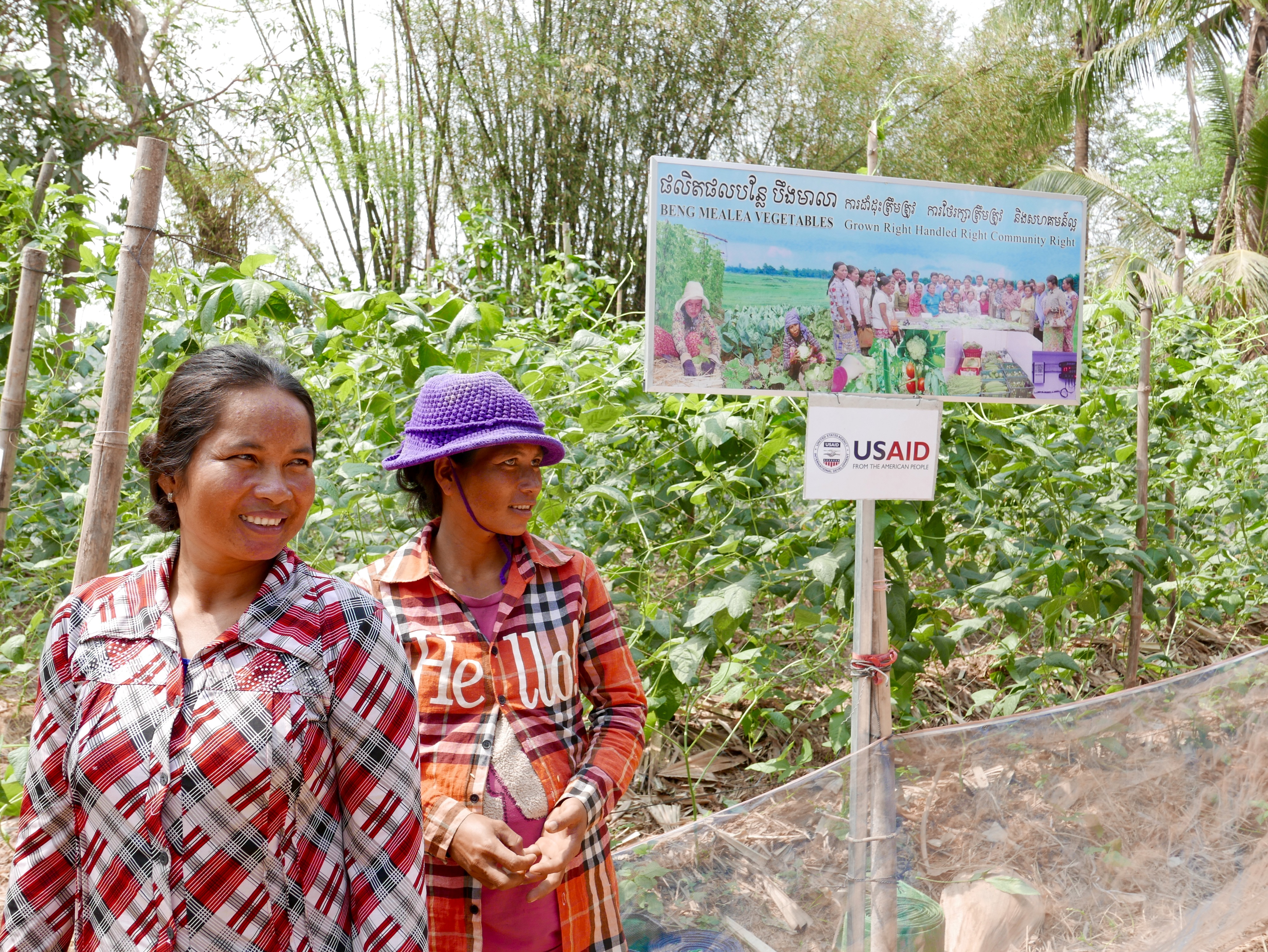 Women farmers growing vegetables with conservation agriculture practices and drip irrigation in Cambodia, with project sign and USAID logo.