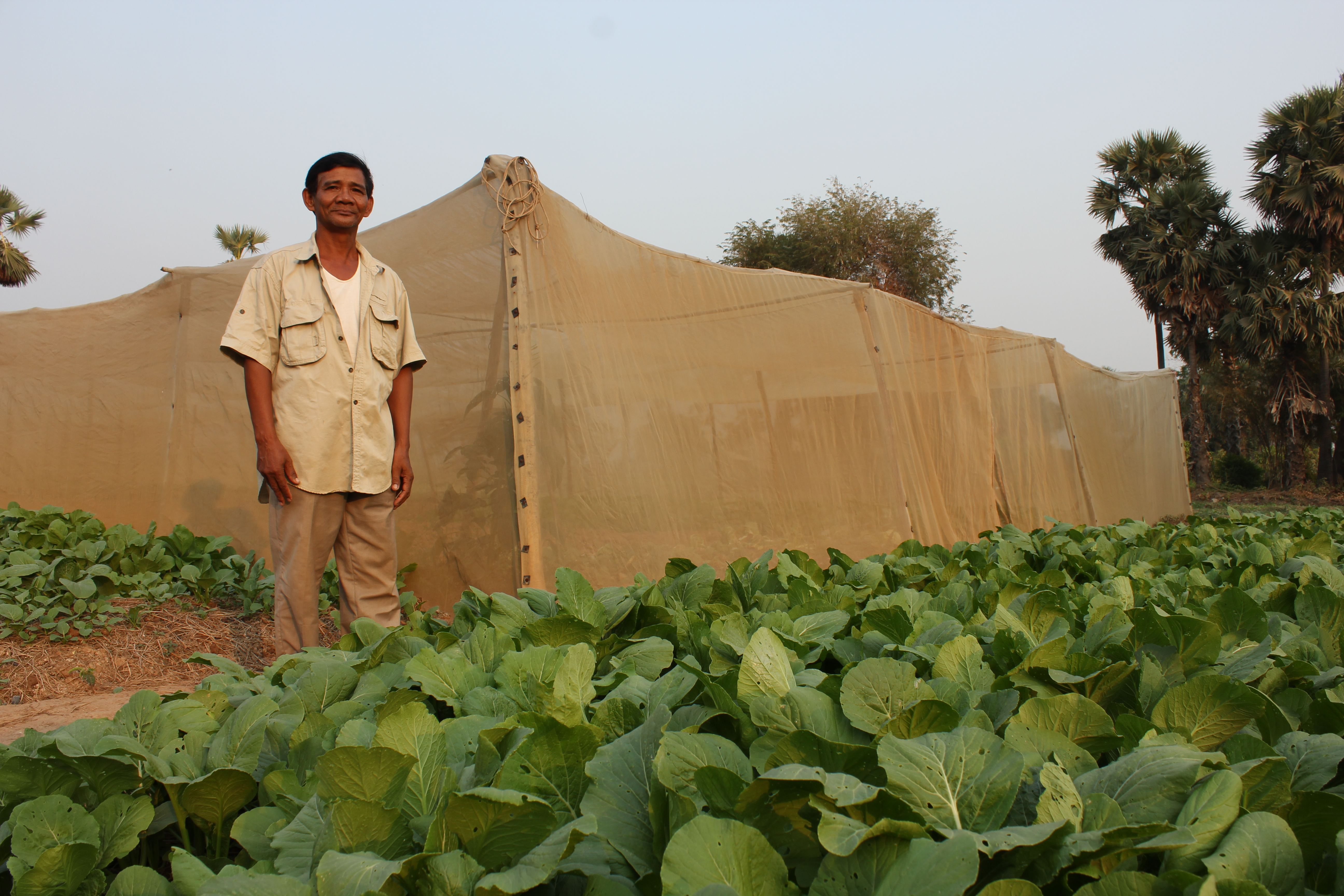 Cambodian man stands in a vegetable field with leafy greens growing, just outside of a nethouse