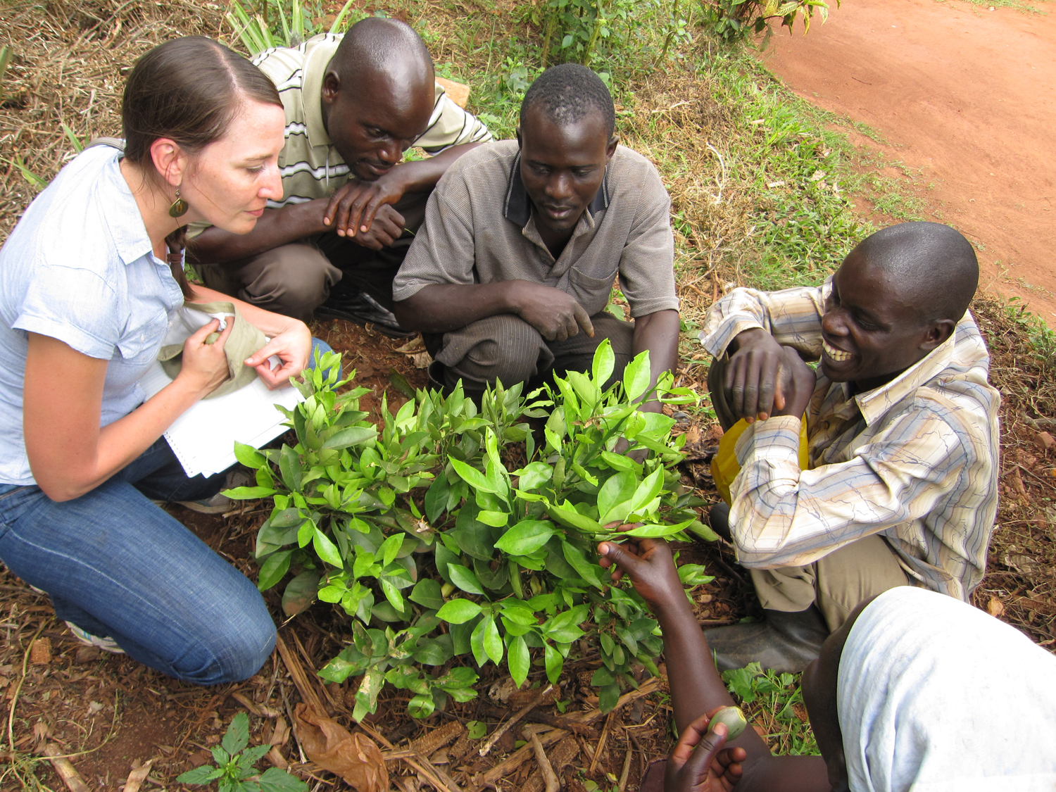Student with notepad listens as Ugandans point out problems with a citrus tree.