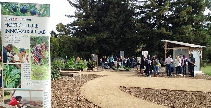 Horticulture Innovation Lab sign in front of garden path with groups of people looking at demonstrations