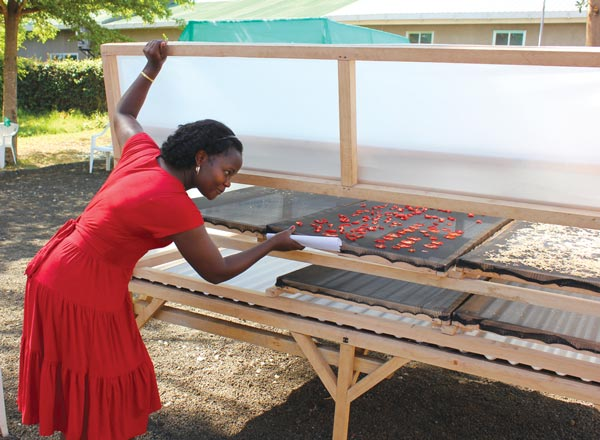 Noel Makete, a Kenyan scientist, checks on vegetables in a solar dryer during a Horticulture Innovation Lab training session in Arusha, Tanzania.