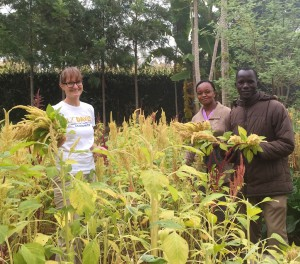 Three people holding amaranth grain in field of amaranth