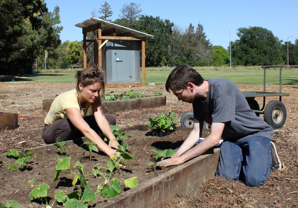 Two people plant seelings in a raised bed