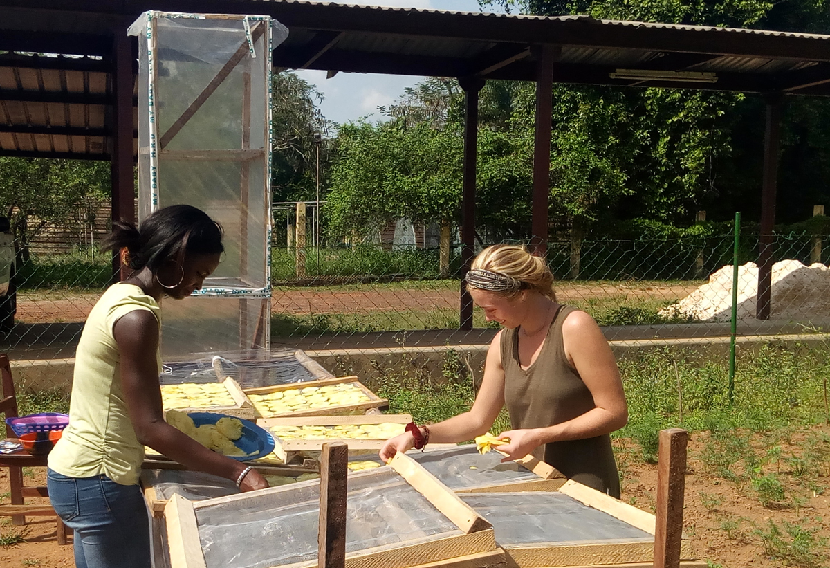Young women lay out pineapple slices in a chimney solar dryer