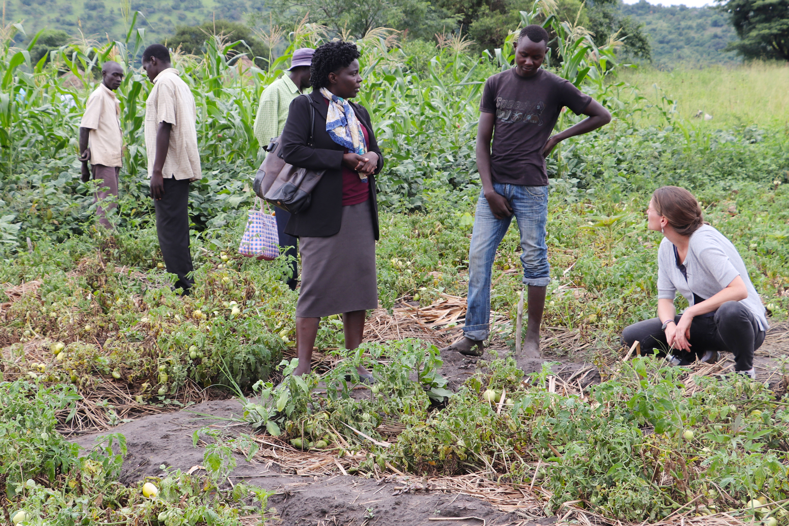 Farmer, social worker and scientist discuss innovation at a farm in Uganda