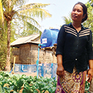 Vegetable farmer in Cambodia using conservation agriculture