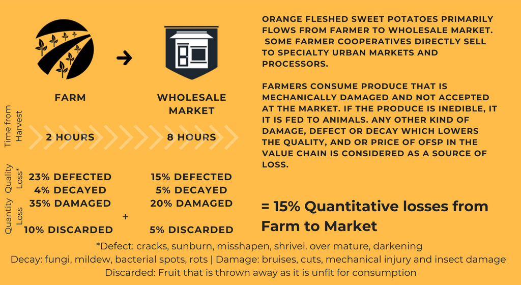 Sweet potato postharvest losses infographic from farm to market in Rwanda