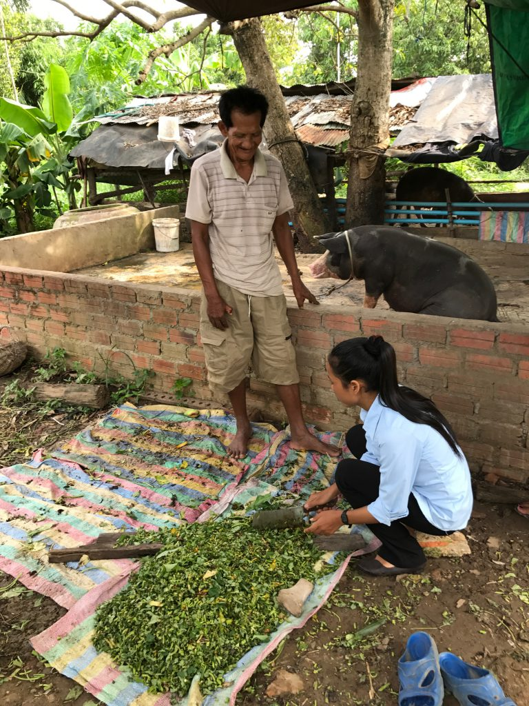 Cambodian pig feed researcher