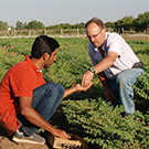 Scientists collaborating in chickpea field
