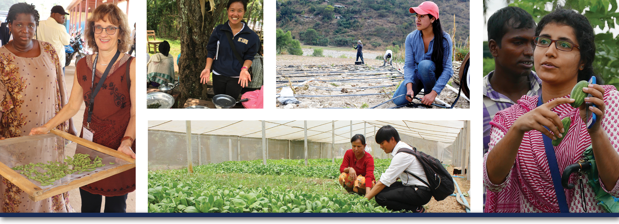 Horticulture Innovation Lab collage showing scientists, students, and farmers working with fruits and vegetables
