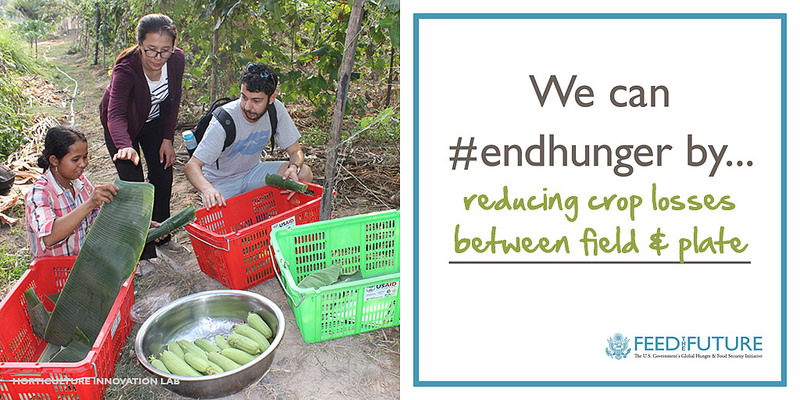 We can #endhunger by reducing crop losses between field & plate