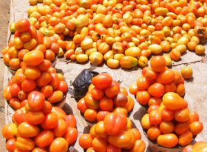Tomatoes on the ground and in piles for sale