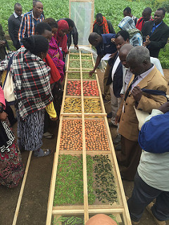 Group examines sliced vegetables on solar drying trays