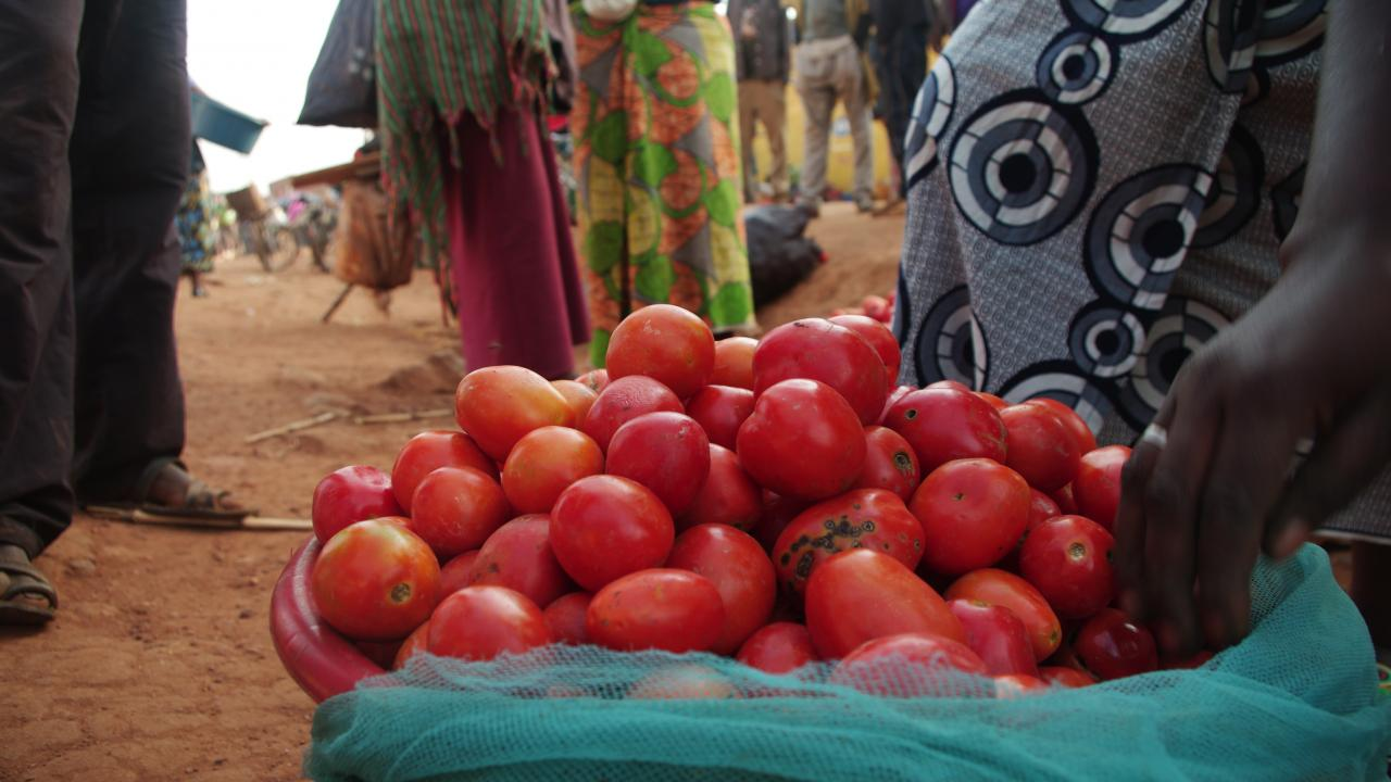 Bins of tomatoes at outdoor market in Rwanda