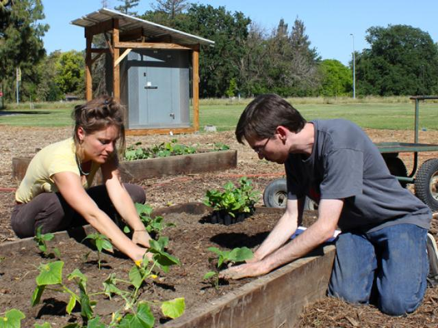 Students planting vegetables at the outdoor demonstration center at UC Davis