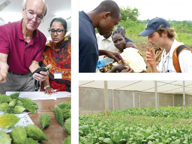 Brochure collage - scientists examine vegetables in Asia, Africa and Latin America