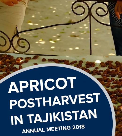 """Apricot postharvest in tajikistan, annual meeting 2018"" text on photo of apricots drying"