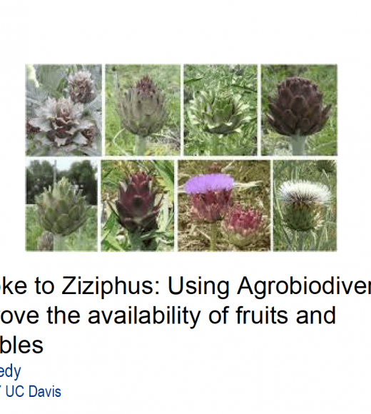 Artichoke to ziziphus - Using agrobiodiversity to improve the availability of fruits and vegetables - title slide