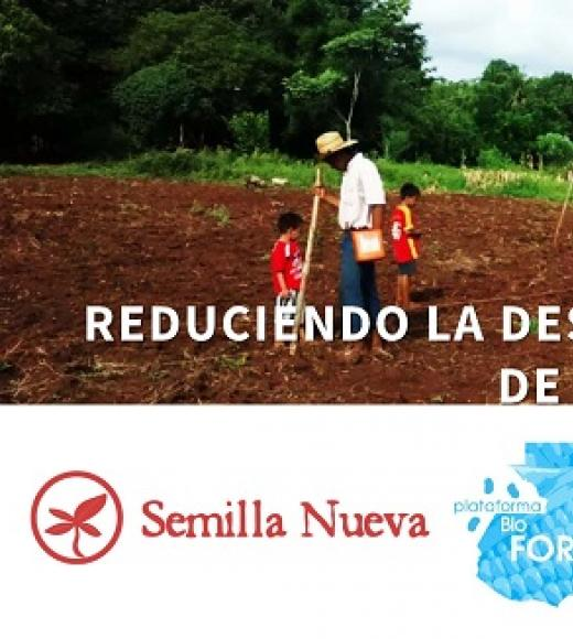 """Reduciendo la desnutrición a través de la biofortificación"" photo of Guatemalan farmers in a field, semilla nueava logo, title slide"