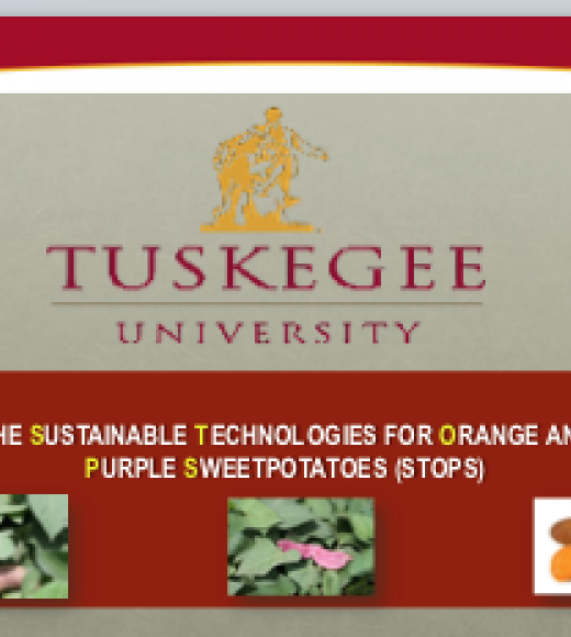 Research on orange- and purple-fleshed sweet potatoes