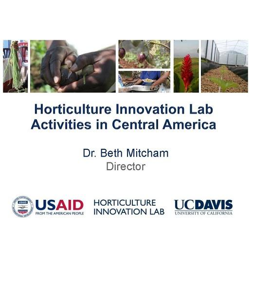 Horticulture Innovation Lab: Activities in Central America - Title Slide