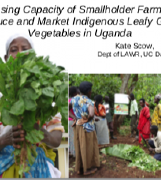 Increasing capacity of smallholder farmers to produce and market indigenous leafy green vegetables