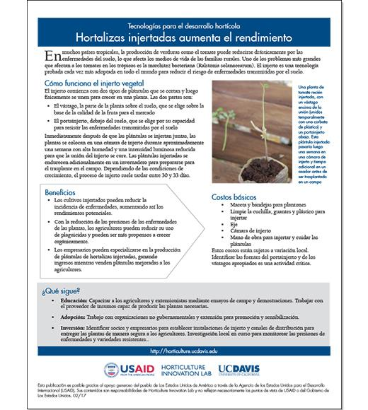 Hortalizas injertadas aumenta el rendimiento - Spanish vegetable grafting fact sheet