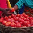 Close-up on basket of tomatoes at a market in Rwanda