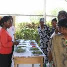 Trainers talk to farmers about maintaining freshness and proper postharvest handling of various vegetable crops after harvest.