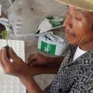 Farmer holds up a newly grafted vegetable seedling