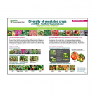 Diversity of Vegetable Crops at the World Vegetable Center, Regional Center for Africa Poster