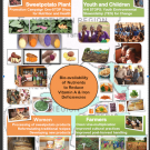 Sustainable technologies for orange and purple sweet potatoes in Ghana