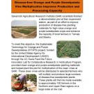 Handout: Strengthening the value chain for orange- and purple-fleshed sweet potatoes