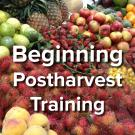 Beginning Postharvest Training - words on background image of fresh fruits at market