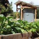 Photo of raised bed with lots of healthy vegetables growing, CoolBot chamber in the background.
