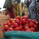 Bin of tomatoes on ground in a market in Rwanda