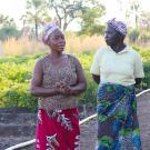 Nsongwe women farmers at their vegetable field in Zambia.