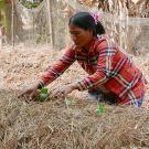 Woman farmer kneels in a field row, planting seedlings into mulch