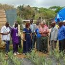 Group visits pineapple plot at demonstration center in Guinea