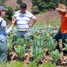 Woman, man and youth talking in vegetable field